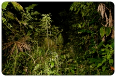 HayleyMurphyPhotography-01-3258