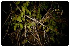 HayleyMurphyPhotography-03
