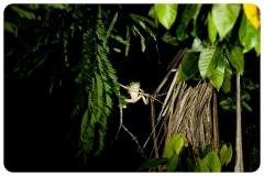 HayleyMurphyPhotography-05-3342